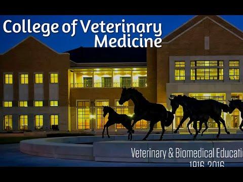 College of Veterinary Medicine | Bachelor Degree Online University