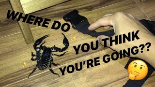 Download GIANT SCORPION escaped in your room ~ WHERE WILL IT GO ??! Video