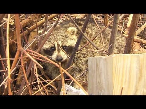 Pests 101: How to keep unwanted critters out of your home