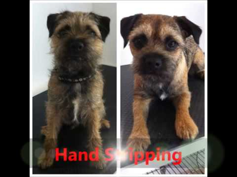Appy Paws Dog Grooming