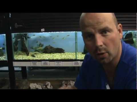 Aquarium Advice - Gravel or Sand? by Pondguru