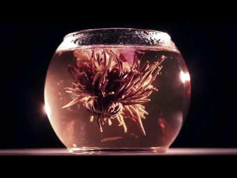 Blooming Tea Time-lapse
