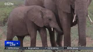 Experts track elephants with seismic tools to target poachers