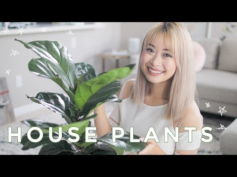 Best Indoor Plants | Cute House Plants That Clean The Air 🌿
