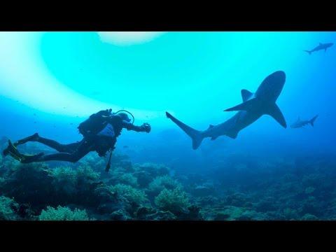 Scuba Diving with SHARKS!! Bassas Da India - Sailing SV Delos Ep. 100