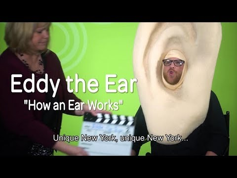 Eddy the Ear - How Hearing Works