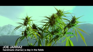 IndianCharras | a day in the fields | the arrival