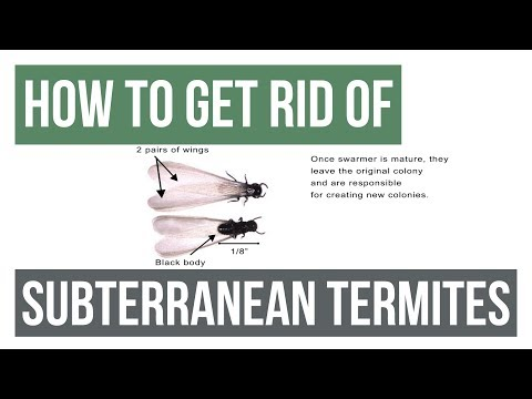 How to Get Rid Of Eastern Subterranean Termites Guaranteed- 4 Easy Steps