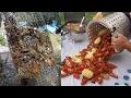 Crawfish Boil with Homemade Crawfish Traps!