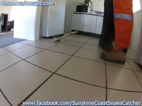 Big carpet python in a kitchen