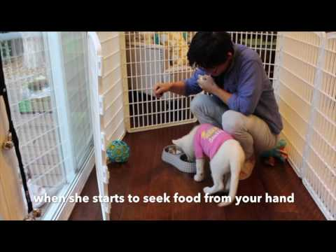 How to stop puppy food aggression