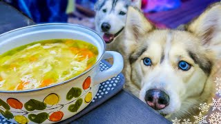 Chicken Soup For Dogs Diy How To Make Chicken Soup For Dogs Snow Dogs