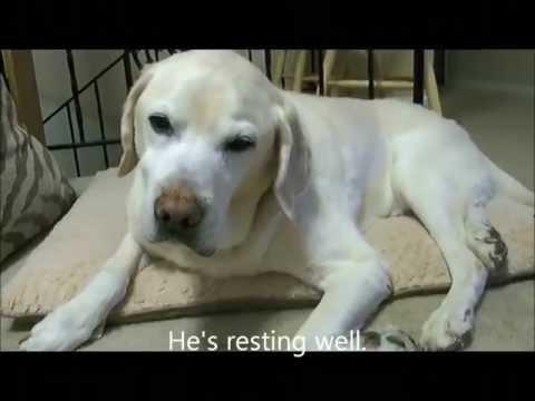 My dog Casey with Vestibular Syndrome