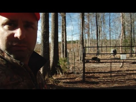 Alabama Hog Trapping - The Management Advantage
