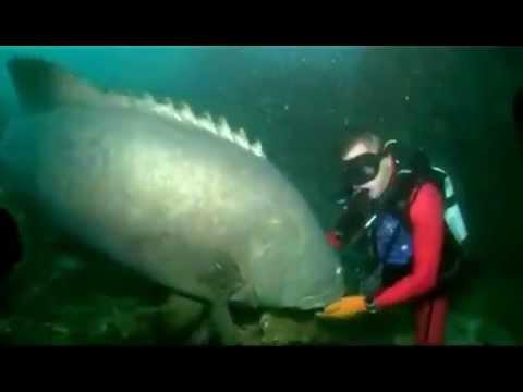 Massive Fish Bites Scuba Diver DANGER!