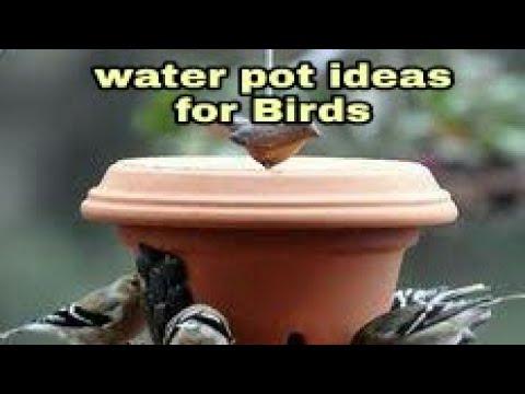 Water pot for birds in summer