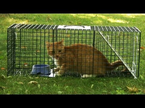 NEW! - 1 Year of Humane Animal Trapping