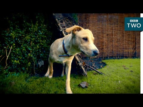 The disappearing dog - 10 Puppies and Us: Episode 1 Preview - BBC Two