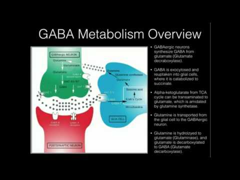 L-Theanine Supplementation and why GABA Doesn't Work
