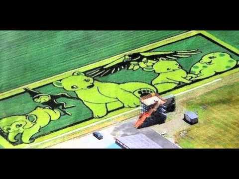 Rice Field Art