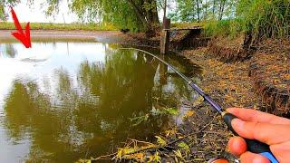 В луже наловил голодных щук! По рекам и озерам охочусь за хищником!
