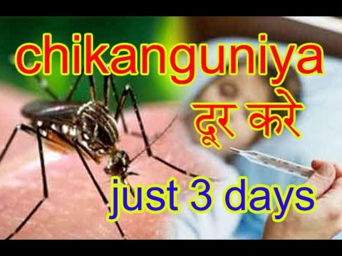 ===Chikungunya Treatment In Hindi And Urdu|Chikungunya Ka Gharelu Ilaj In Hindi And Urdu===