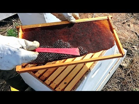 What to Do to a Weak Beehive in a Spring?