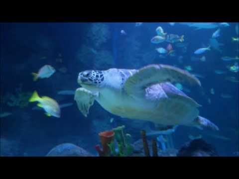Sea Life in Manchester Trafford Centre