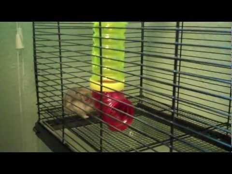 More tips to keep your hamsters happy