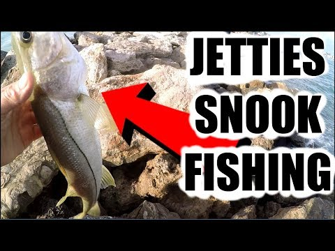 Catching Snook With Small Mojarras Grunts Pinfish At The Jetties