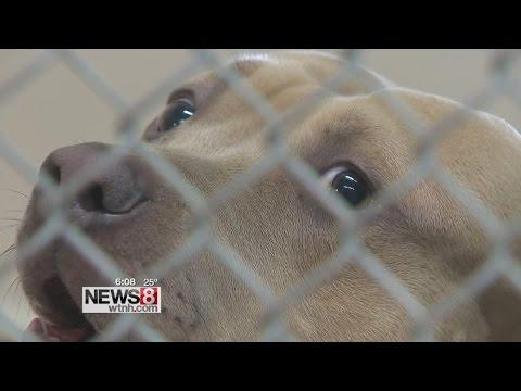 Dog quarantined after saving girl from rabid raccoon