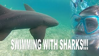 SWIMMING WITH SHARKS IN BELIZE!