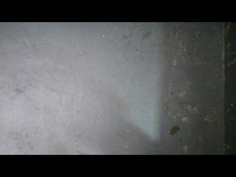 Flex Seal spray, seven coats applied as per directions