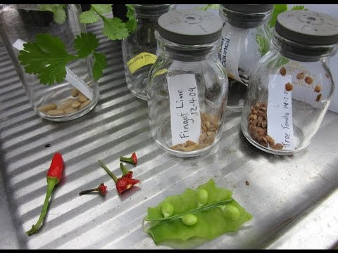 How to Build a Seed Propagation Station
