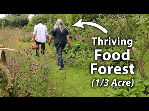 Abundant Permaculture Forest Garden (25 Years Old)