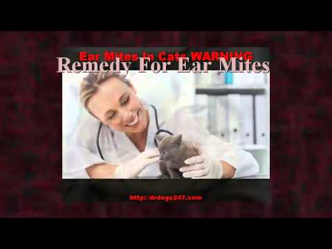 Remedy For Ear Mites In Cats