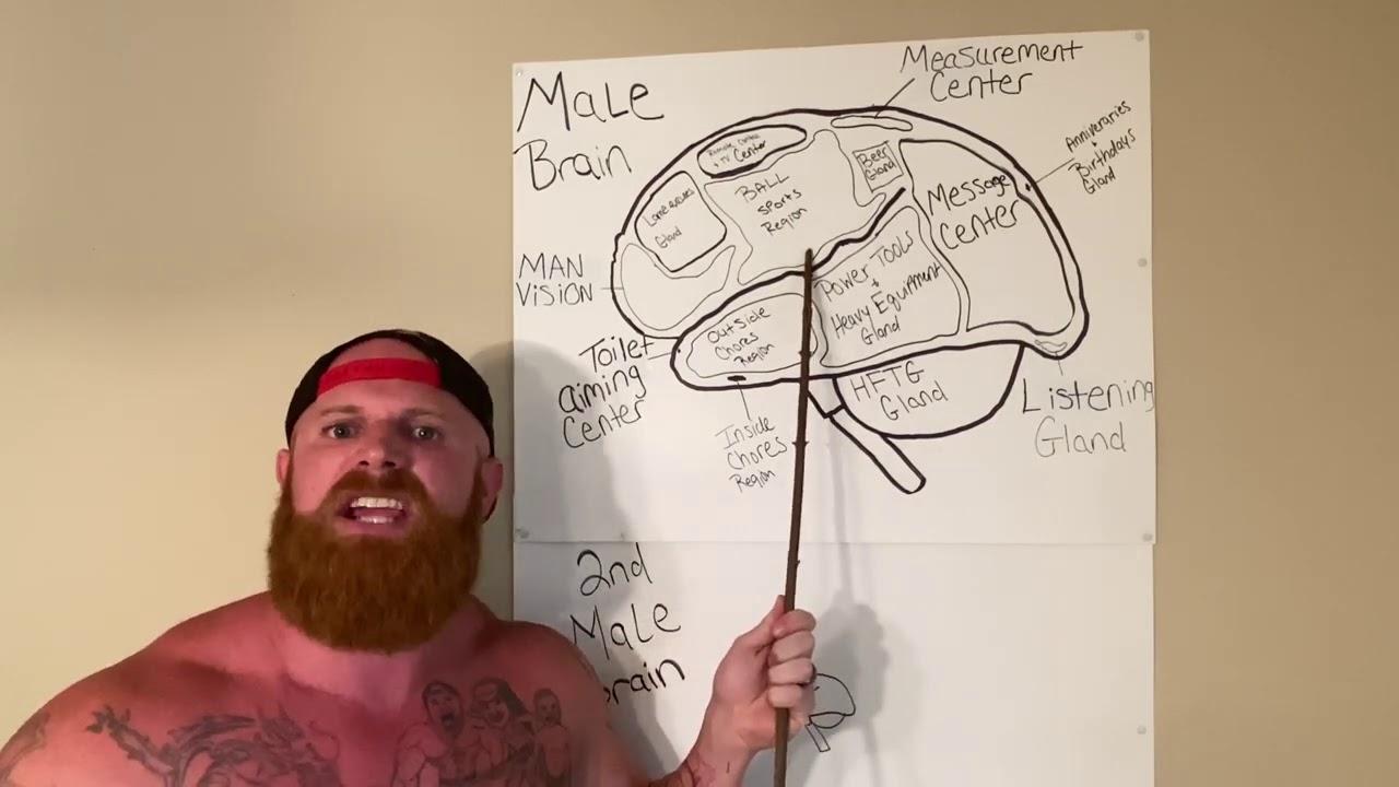 Anatomy of the MALE brain...😄