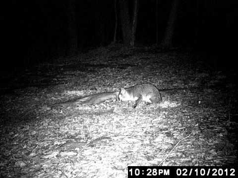 critter cam3