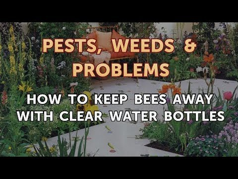 How to Keep Bees Away With Clear Water Bottles