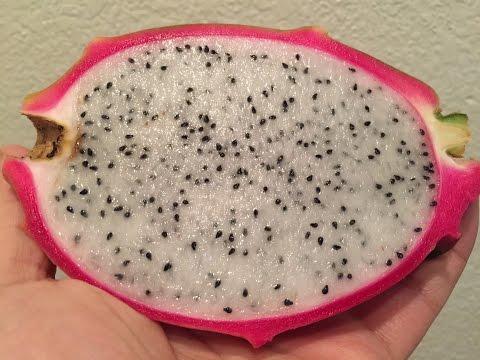 How To Grow Dragon Fruit (Pitaya) From Seeds