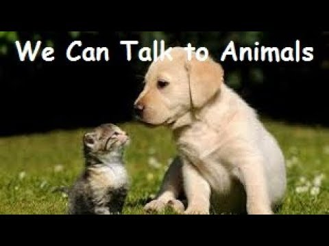 HOW to HAVE TELEPATHY - TALK to ANIMALS