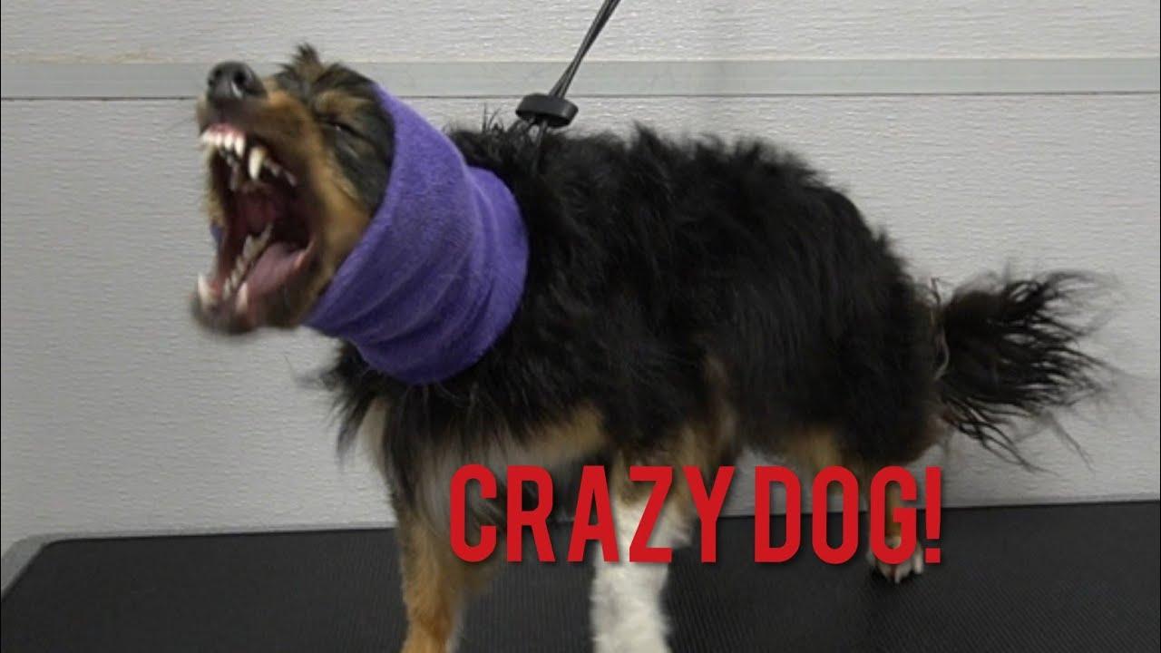Crazy Rescue Dog | Dog Attack
