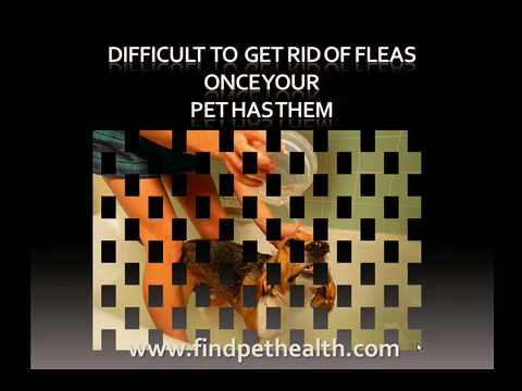 best pet flea medication, and discover the life cycle of fleas