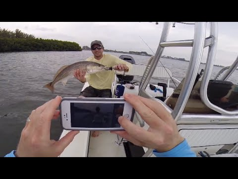 Snook, Redfish, Trout, More Snook, Wounded Warrior, and Pinfish Poop