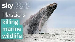 Plastic is killing marine wildlife | #OceanRescue