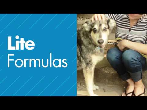 Weight Management for Dogs: Mister