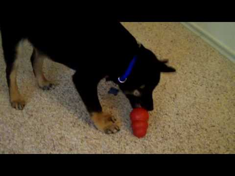 How to keep a puppy busy for 30 minutes (condensed)