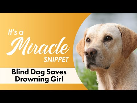 Xxx Mp4 Blind Dog Saves Drowning Girl It 39 S A Miracle 6033 3gp Sex