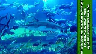 Путевые Заметки.Дубаи,январь 2019: экскурсия по громадному Aquarium & Underwater Dubai в Дубаи Молл