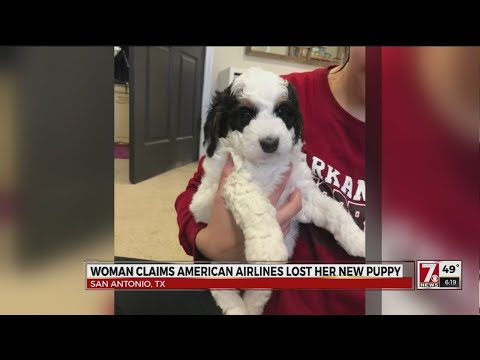 Woman claims American Airlines lost puppy